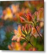 Painterly Rhodies Metal Print