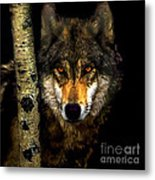 Painting ... Wolf In Aspen Grove Metal Print