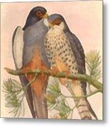 Pair Amur Falcons Metal Print