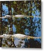 Pair Of American Alligators Metal Print