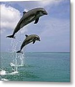 Pair Of Bottle Nose Dolphins Jumping Metal Print