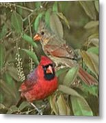 Pair Of Cardinals Metal Print
