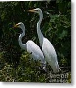 Pair Of Herons Metal Print