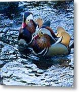 Pair Of Male Mandarin Duck-signed-#8236 Metal Print