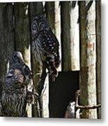 Pair Of Owls Metal Print