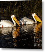 Pair Of Pelicans   #6935 Metal Print