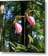 Pair Of Pink Lady Slippers  Metal Print