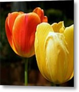 Pair Of Red And Yellow Tulips Metal Print