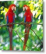 Pair Of Scarlet Macaws Metal Print