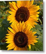 Pair Of Sunflowers Metal Print