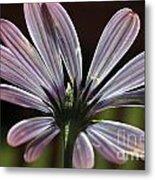 Pale Blue Flower Backlit Metal Print