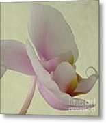 Pale Orchid On Cream Metal Print