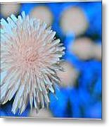 Pale Pink Bright Blue Metal Print