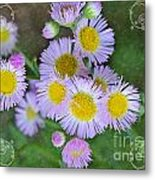 Pale Pink Fleabane Blooms With Decorations Metal Print