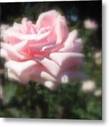 Pale Pink Rose I Metal Print