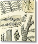 Paleozoic Flora, Calamites, Illustration Metal Print