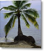 Palm At The Edge Of The Sea Number Two Metal Print