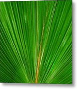 Palm Closeup Metal Print