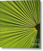 Palm Fron Abstract Metal Print