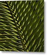 Palm Frond Patterns Metal Print