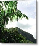 Palm Fronds El Yunque Metal Print