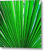 Palm Leaf 6687 Metal Print