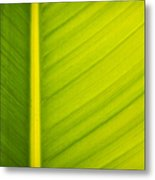 Palm Leaf Macro Abstract Metal Print by Adam Romanowicz