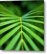 Palm Leaf Pattern Metal Print