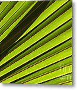 Palm Lines Metal Print