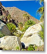 Palm Oasis On Borrego Palm Canyon Trail In Anza-borrego Desert Sp-ca Metal Print