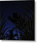 Palm Sky Metal Print