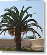 Palm Tree 3 Metal Print