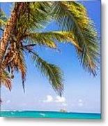Palm Tree And Caribbean Metal Print