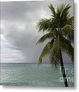 Palm Tree And Ocean Metal Print