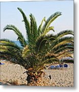 Palm Tree By The Beach Metal Print