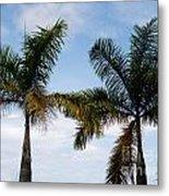 Palm Tree In Costa Rica Metal Print