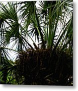 Palm Tree In Curacao Metal Print