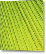 Palm Tree Leaf Abstract Metal Print