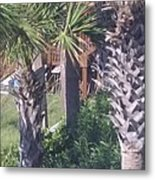 Palm Tree Scenery Metal Print