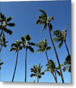 Palm Trees Against A Clear Blue Sky Metal Print