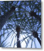 Palm Trees In The Sun Metal Print