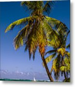 Palm Trees On The Beach Metal Print