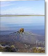 Palm Water Metal Print