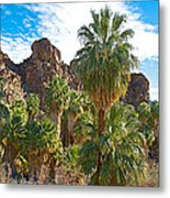 Palms Stand Tall In Andreas Canyon In Indian Canyons-ca Metal Print
