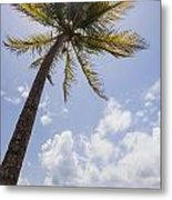 Palms Trees Along Luquillo Beach In Puerto Rico Metal Print