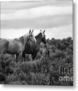 Palomino - Buttes - Wild Horses - Bw Metal Print