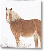 Palomino Horse In The Snow Metal Print