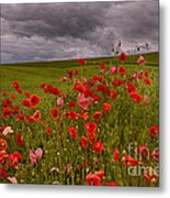 Palouse Poppies Metal Print
