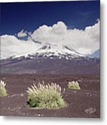 Pampas Grass And Old Lava Flow Llaima Metal Print