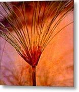 Pampas Grass - II Metal Print